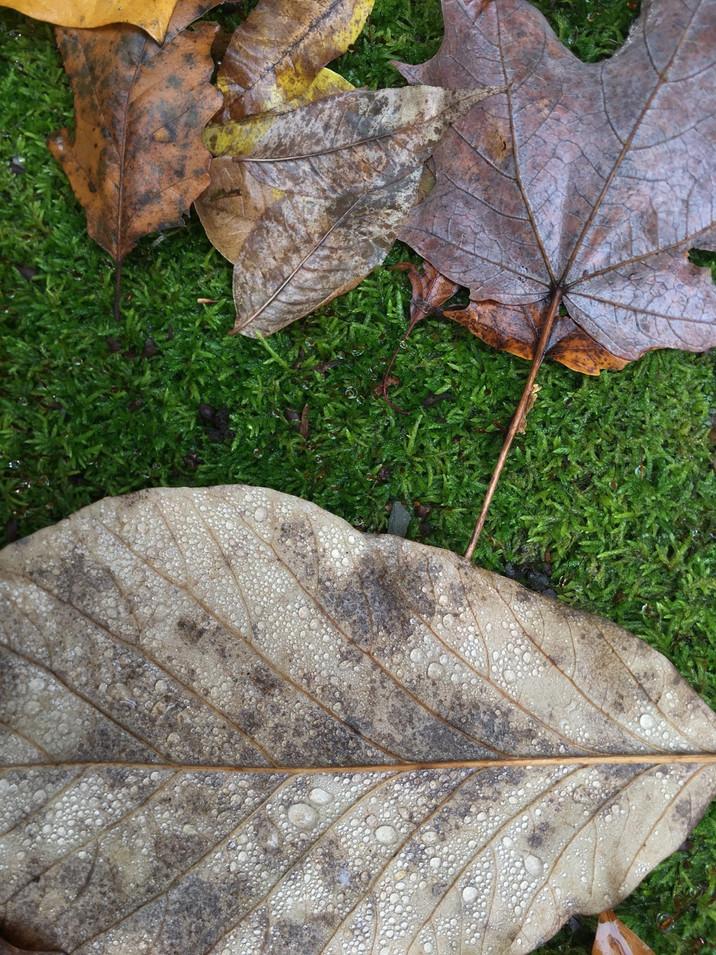 Fallen on Moss