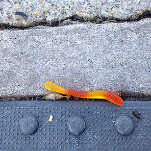 city worm lover