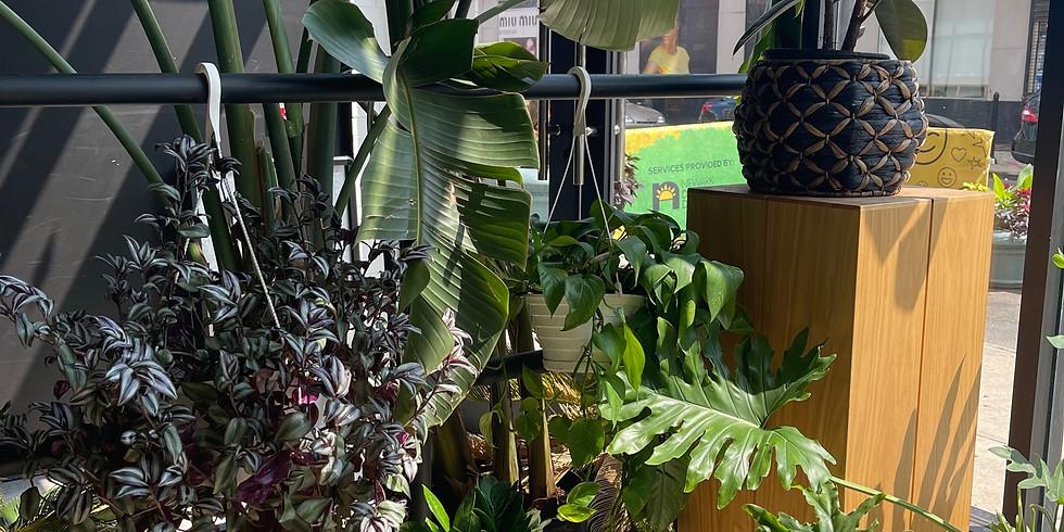 Plant & Paint-A-Pot Social