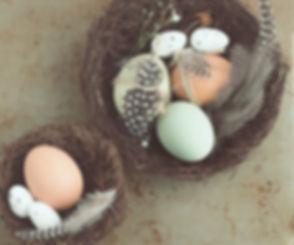 Eggs Fertility IVF Infertility Conceptio