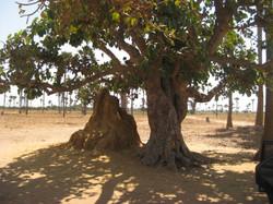 Circuit du Nord au Saloum
