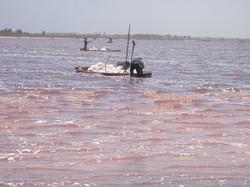 J1: Lac rose