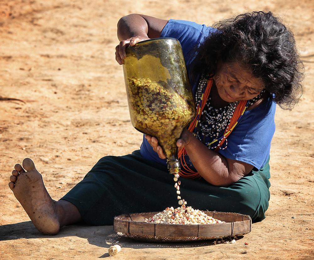 Preservar é Resistir - Festa do Milho Aldeia Araponga - Dona Marciana separando o Milho Sagrado