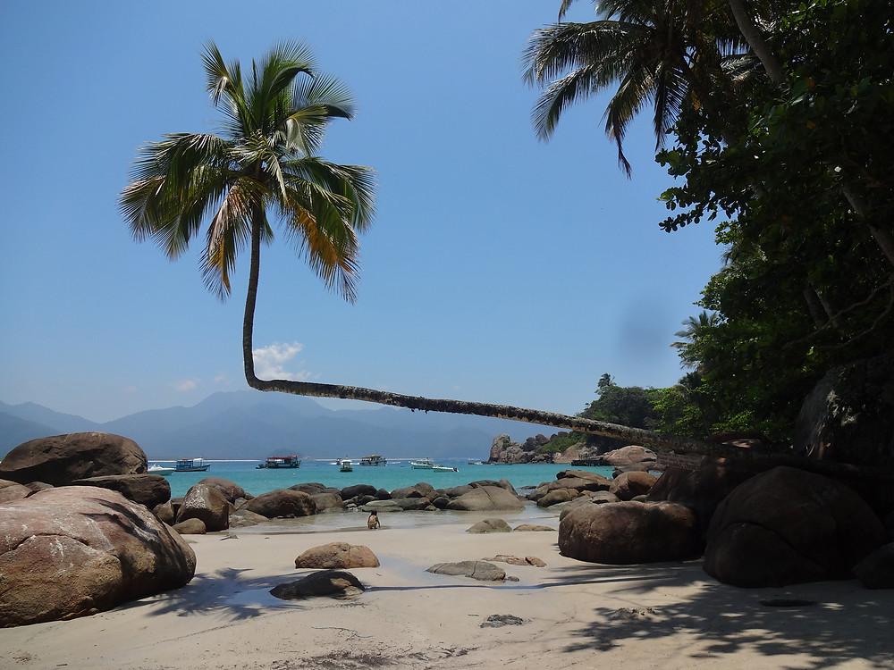 Preservar é Resistir -Aventureiro Ilha Grande