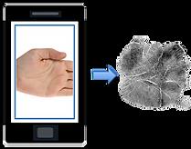 Biométrico de palma sin contacto con vitalidad