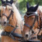 Les Calèches du Lysos - Tourisme