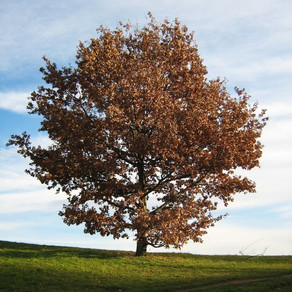 Roots Like a Tree