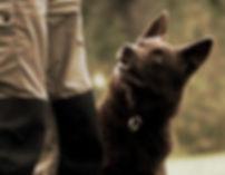 hund, hunddagis, glada, lyckliga, hundar