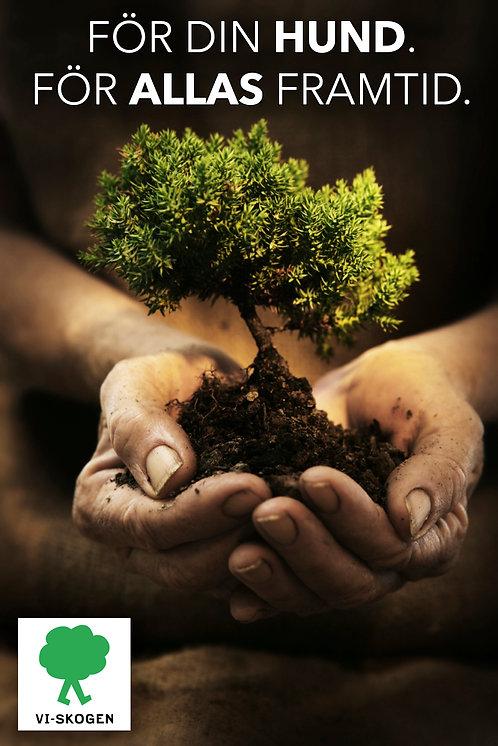 Plantera ett träd!
