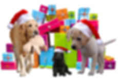 christmas-2983901_960_720.jpg