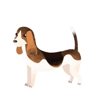 beagle insta.jpg