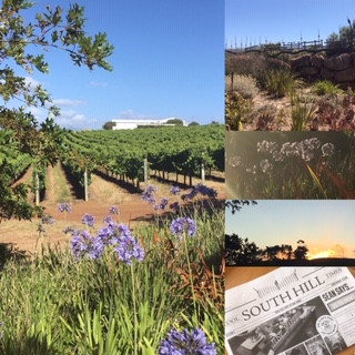 south hill vineyard Elgin