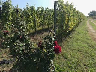 Bordeaux Wine, Chateau La Tour de Chollet, Blanc sec Exceptionel, Cuvee Prestige