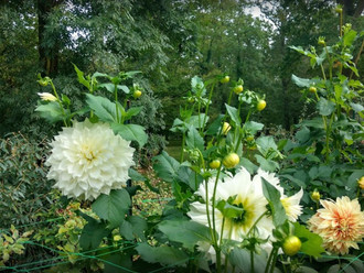 JOURNÉE de méditation en silence et en conscience – à L'Espace CityZen, au Parc Floral de Vincennes