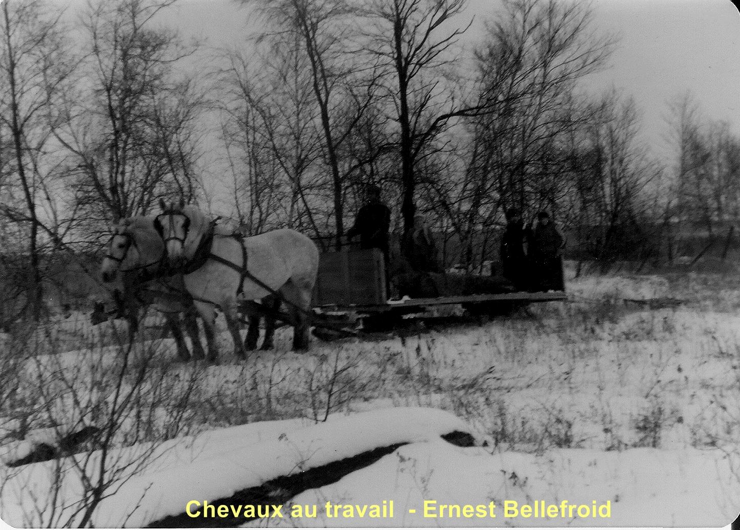 Chevaux au travail Ernest Bellefroid