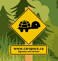 carapace.ca2.png