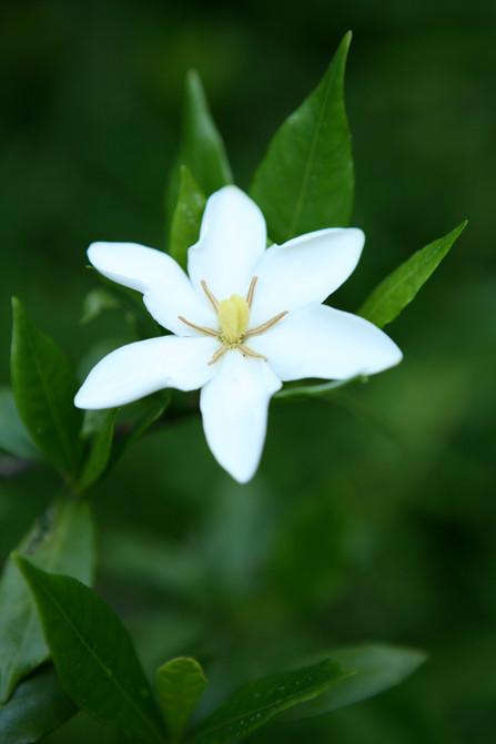 Carmel Beach Flower