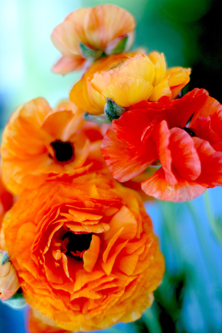 Orange Blossums Two