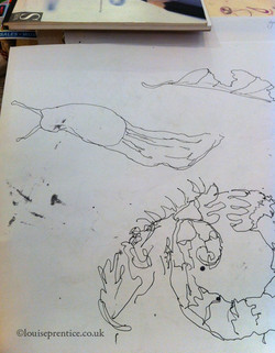 Pen line drawing of a slug