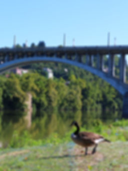 Goose by Fairmont High Level Bridge