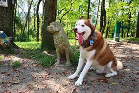 Dog at East Marion Dog Park