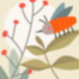 insecte carbassa web.jpg