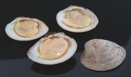 Clams on Half Shell