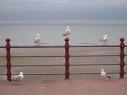 ブラックプール アイリッシュ海沿いの景色2