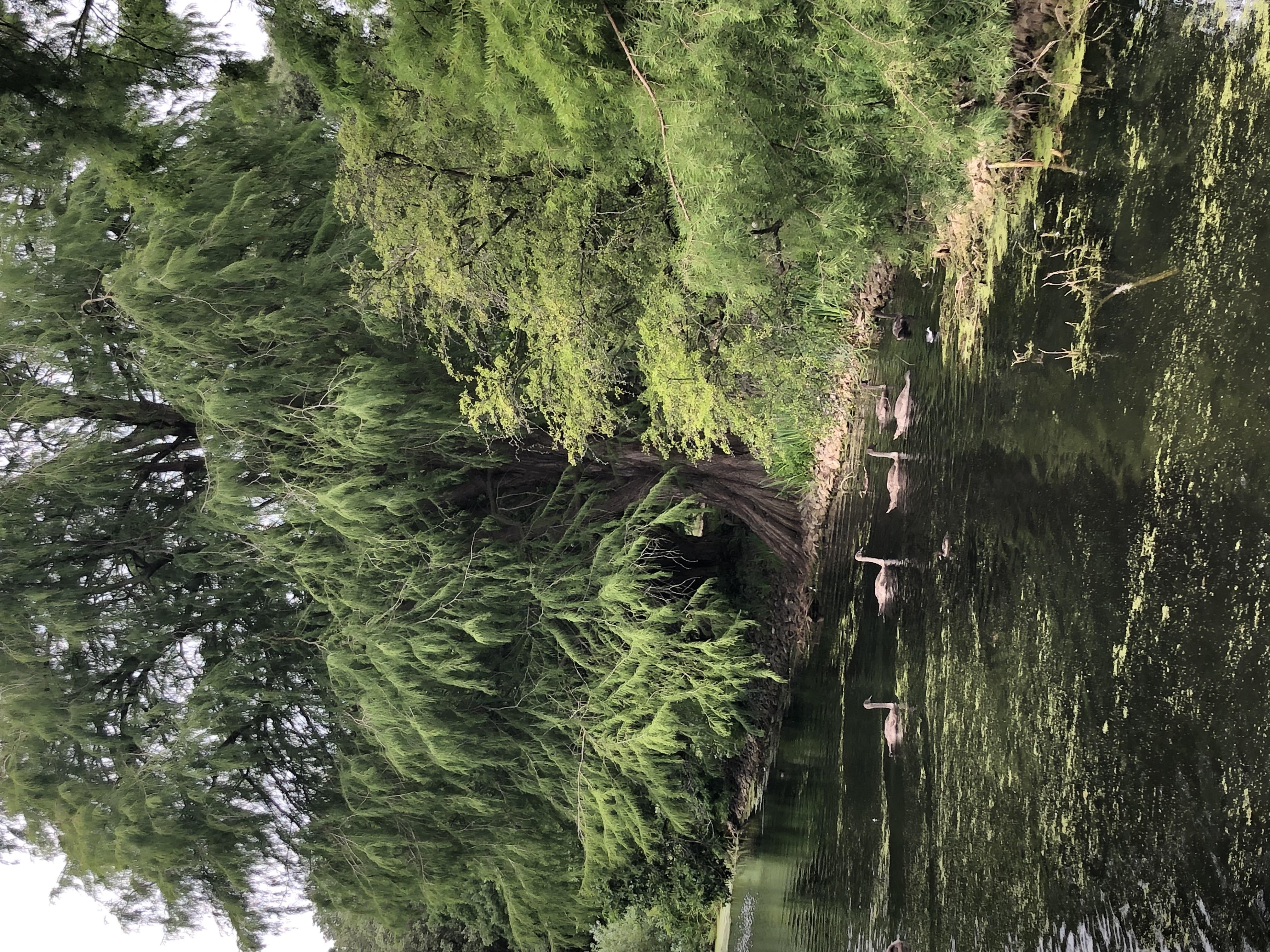 Garden Kew