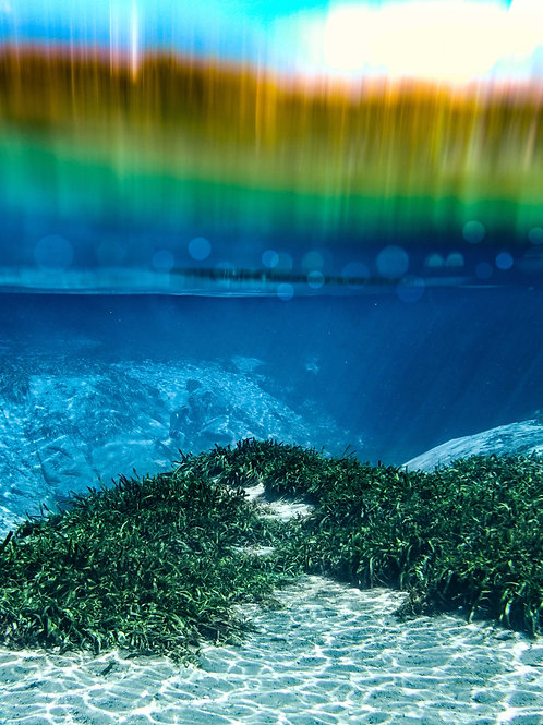 Alexander Springs Rainbow
