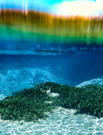 Alexander Rainbow.jpg