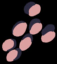 THL-Spots-Blush.png