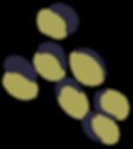 THL-Spots-GreenOlive_edited.png