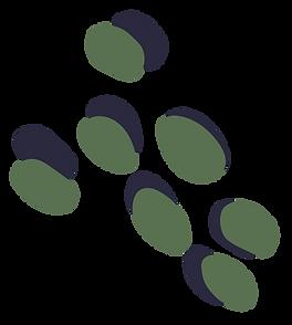 THL-Spots-Sage_edited.png