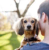 a cute dachshund puppy o a woman's shoulder in the park