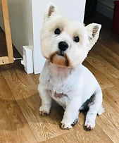 dog groomer york