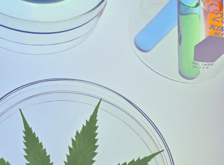 Medicinal Cannabis: A Case Study