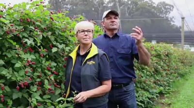 YV Fresh brand video by Melbourne digital marketing agency Haines Media
