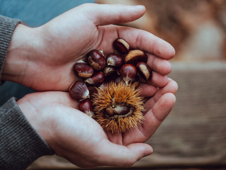 5 Reasons you should be implementing chestnuts into your diet!