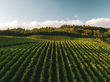 Grants Supporting Agribusinesses To Be More Sustainable