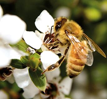 The Powers of Honey!