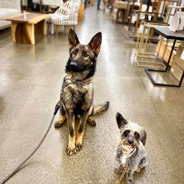 ruach_dog_training.jpg