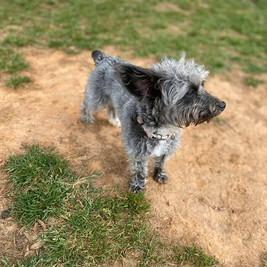 small_dog_training.jpg