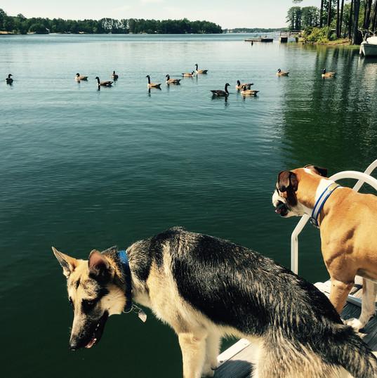 dog_daycare_camp.jpg