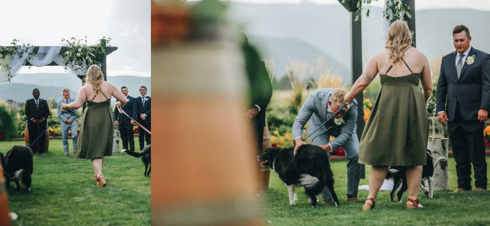 dogs at wedding ceremony