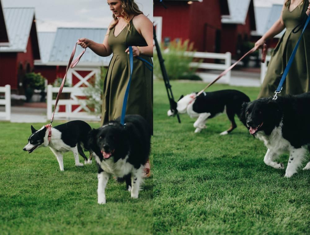 dog bridesmaids