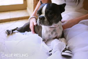 denver wedding photographer - clock tower wedding photographer