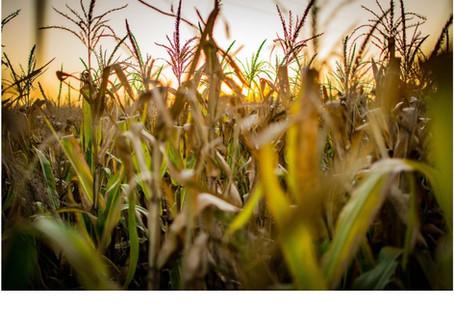 ¿Qué deben saber las empresas agropecuarias ante un nuevo cierre fiscal?
