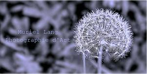 Muriel Lang Photographie d'Art