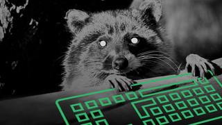The Raccoons student platform